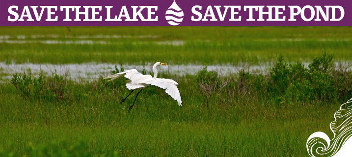 Save the Lake - Save the Pond